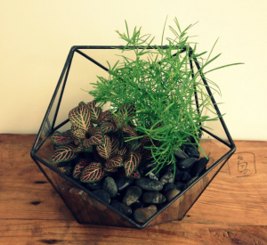 We are so excited to be carrying a new line of glass terrariums in the studio.  We are lovers of all things vintage and antique,  but did you know that we also have a soft spot in our hearts for the up-cycled?  These uniquely shaped planters caught our eye right away.  They are handmade by a Halifax company called Minimalistos.  Minimalistos creates these unique glass pieces out of old window panes – what a fantastic way to keep old building supplies out of the landfill!  The geometric shapes of these terrariums are the perfect accent to a contemporary space.  Come in the studio and check them out!